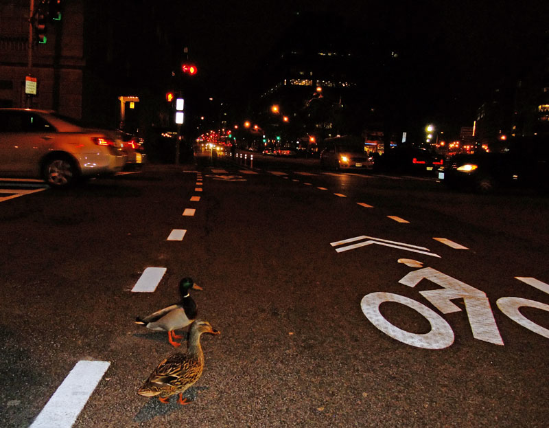 We're not just about bikes. It's technically a cycling/pedestrian coalition, working together to make sure the transportation infrastructure meets the needs of all users, not just motorists. Even ducks.