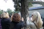 IMG_0296_energy_tree
