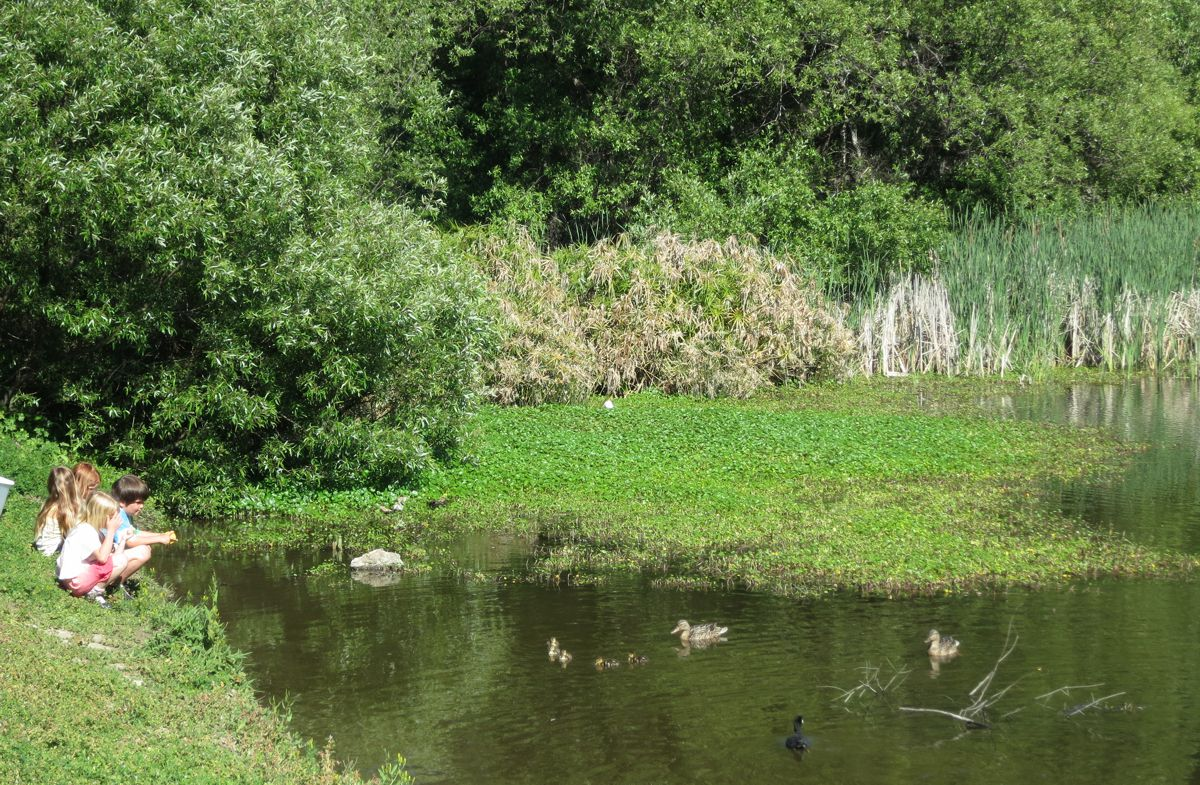The LaHonda Duck Pond, complete with the basics. Ducks, ducklings & children!