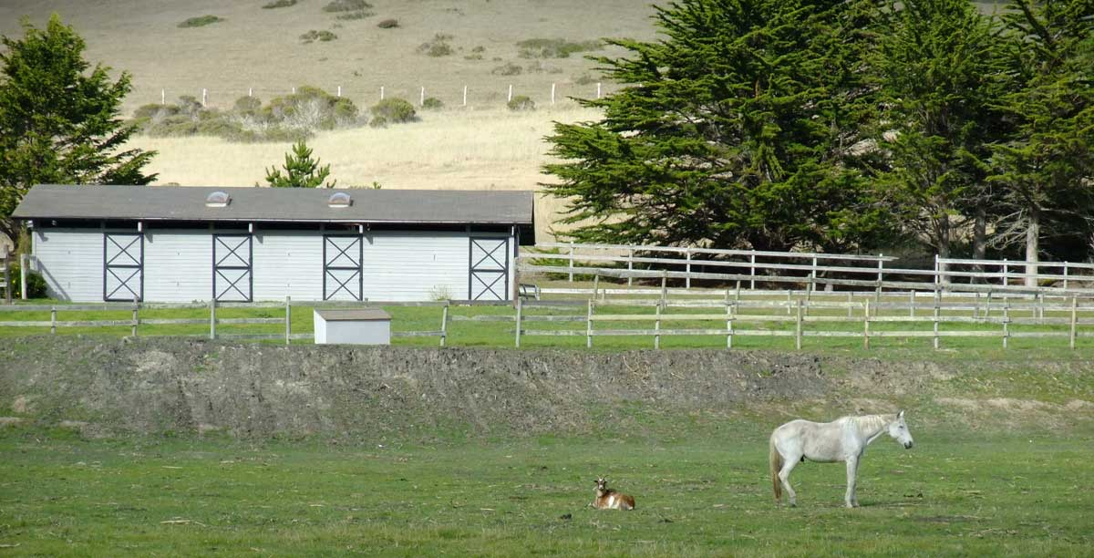 Over a period of three years or so, the goat in this field and that horse were inseparable, something you could always depend on seeing as you started up Tunitas Creek from the coast.