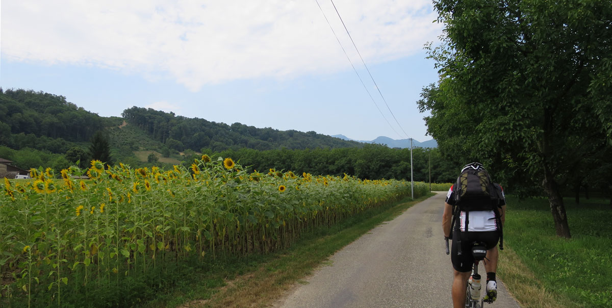 Our first encounter with Sunflowers, and what would France and the 'Tour be without Sunflowers?